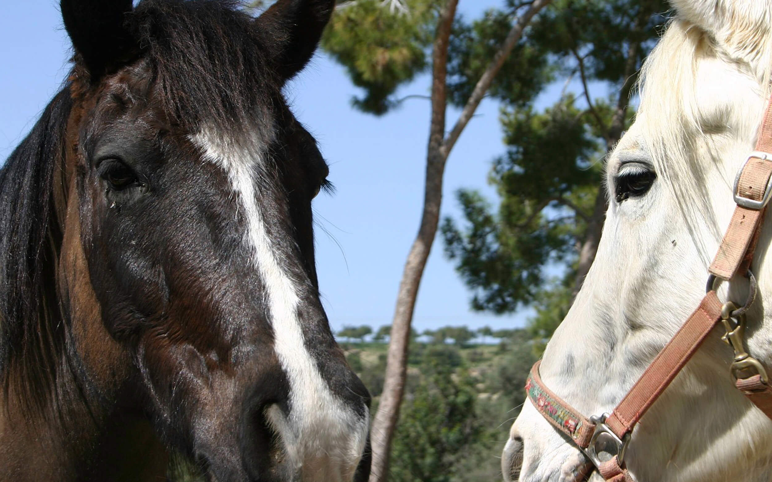 aphrodite hills horse riding club